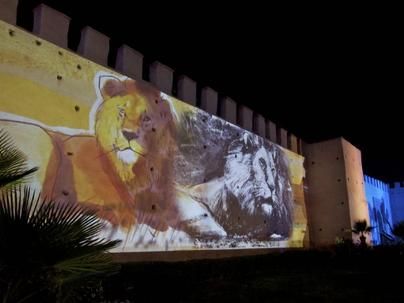 rempart-de-marrakech-lions